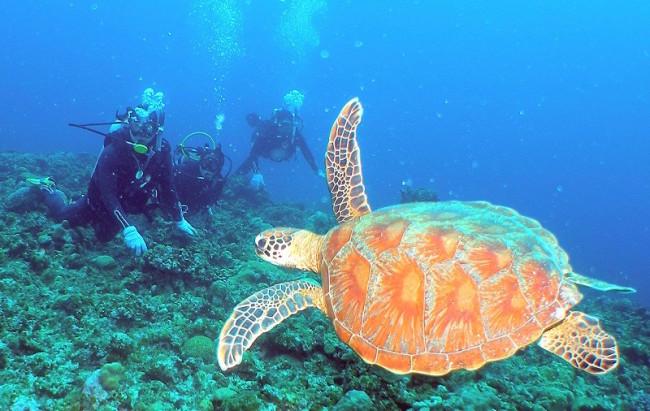 seadiving